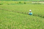 ITを駆使して農業を盛り上げよう!~東京農工大学 澁澤研究室の紹介~