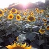 『夕陽に照らされて』の画像