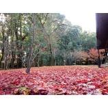 『紅葉を求めて』の画像