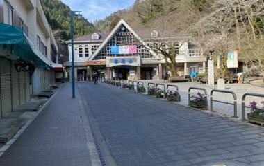 『高尾山✨ハナネコノメ咲き始めました🌸』の画像