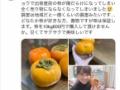 【朗報】柿農家さん、とんでもない方法で売り物にならなくなった柿を売りさばく事に成功するwwwww(画像あり)