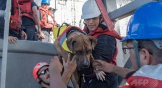 【⛵太平洋で漂流5か月】米国人女性2人と愛犬2匹を救助 台湾漁船の乗組員が発見、米当局に通報