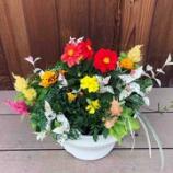 『【教室】5月開催☆ケイトウとマリーゴールドを株分けする花束のような寄せ植え』の画像