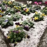 『11月の雪』の画像