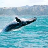 『クジラと共に生きる - 捕鯨ゼロへ、地球の意識が変わり始めた』の画像