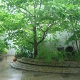 『木陰でちょこん・・・』の画像