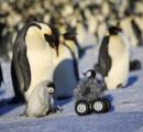 【画像】ペンギンロボットがペンギンの群れに紛れこむ