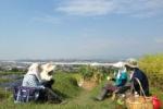 『農とのふれあい体験』っていうのが募集されている!~長宝寺小学校横の農地で年4回のスケジュール~