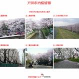 『戸田市の桜 咲き始めました! 市内の桜の名所をチェックしておきましょう』の画像