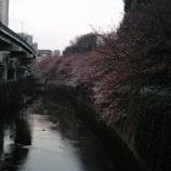 『江戸川橋公園の桜』の画像