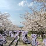 『蹴上インクラインに桜を見に行ってまいりました』の画像