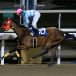 『道営移籍組の快進撃 & 18年産最終募集馬』の画像