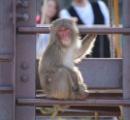 こどもの国から猿14頭が脱走 注意呼びかけ