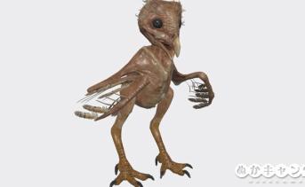 子フクロウ(Owlet)