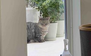 AI図鑑アプリに飼い猫を判定させたら