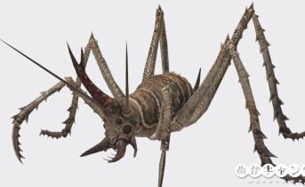 カマドウマ(Cave cricket)
