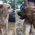 失踪した自閉症の3歳児を守り抜いていたのは2匹の愛犬だった(アメリカ)
