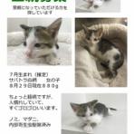 いけの動物病院のブログ