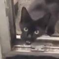 【子ネコ】 いつもやってくる野良猫が私を連れて行く。みんなの分もお願いにゃ → そこには彼女の子供たちがおりました…