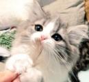 これが1000年に1匹の美猫…かッ!!! あまりにも天使すぎるニャンコが現れてTwitterユーザーがざわつく事態に