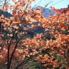 『秩父 武甲山 その1』の画像