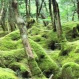 『苔とピアノ:美しい苔の森から』の画像