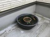 『凍るメダカ鉢』の画像