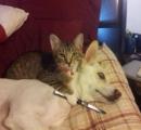 ニューヨークの街中でピットブルテリアが猫に噛みついて離れない状況が発生