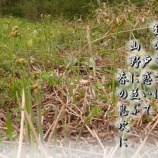 『山野の恵み』の画像