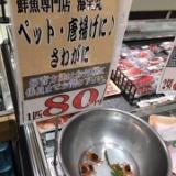 【悲報】サワガニ、最強の生物すぎて絶望