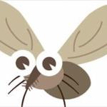 ハエを叩き落とすのは、なぜこんなに難しいのか? 専門家が分析www