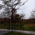 26日、雨のち曇り、休業しています
