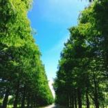 『【2.4kmの絶景】メタセコイア並木通り(滋賀県高島市)で癒し。その後「麺屋 號tetu(コテツ)」(滋賀県長浜市)で名物ラーメンを舌鼓。』の画像
