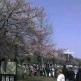 『浮間公園で花見!』の画像