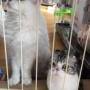 かわいすぎて、つい猫かわいがり!?