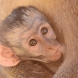 『保存版:動物の赤ちゃんたちの呼び方:英語編』の画像