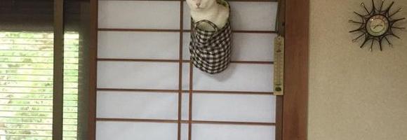 ミノムシみたいになってる猫が可愛いwww(ミノネコ)