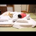 根津のギャラリーマルサンに行った!場所は分かりやすくアクセス良好!柴犬まるのパーカーを買った!