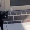 ネコは呼んでも来ない? 庭でパパが呼んでみる → うちの猫はこうなります…