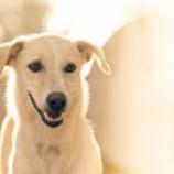 『犬の乳腺腫瘍と乳腺がん』の画像