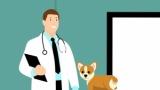 【悲報】うちの無職父親、犬の保険を解約しろと言い出す