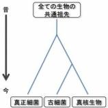 『生物の大系統(1)』の画像