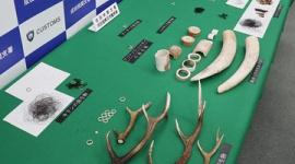 死んだゾウの象牙など密輸出、富士サファリパーク元職員のラオス人を逮捕