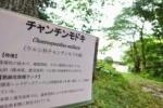 絶滅危惧種のチャンチンモドキが植物園にはおる!~環境省のレッドデータブックには絶滅危惧種~