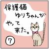 保護猫ゆりちゃんがやってきた⑦【完】