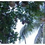『モザンビークの写真など。』の画像