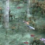『絶景対決!「モネの池(岐阜県関市)」 VS 「逆さもみじ(岐阜県土岐市)」どちらも綺麗ですよ。』の画像