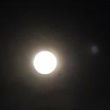 『【お月見】みんな健康ですか?』の画像