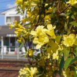 『【写真】 Xperia5 にて、近所。桜散ったあとの春3。』の画像