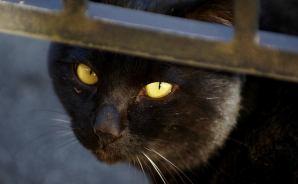 黒猫の写真を撮る